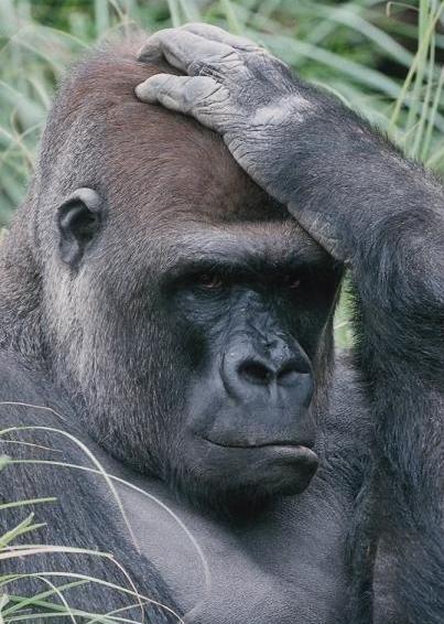 Открытка с думающей обезьяной