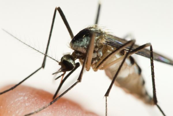 Поставленная ранее задача к 2010-му году снизить заболеваемость малярией в два раза по сравнению с.