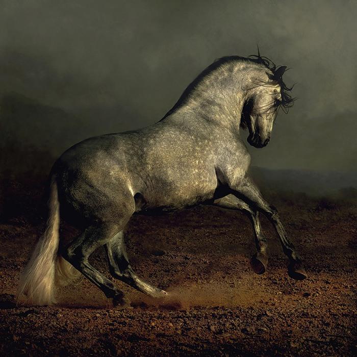 Мраморная лошадь (700x700, 144Kb)