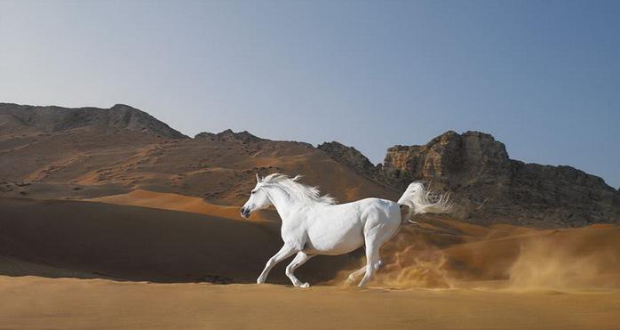 белый конь 1 (700x371, 51Kb)