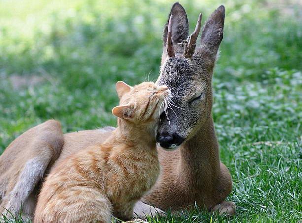 deer (613x453, 58Kb)
