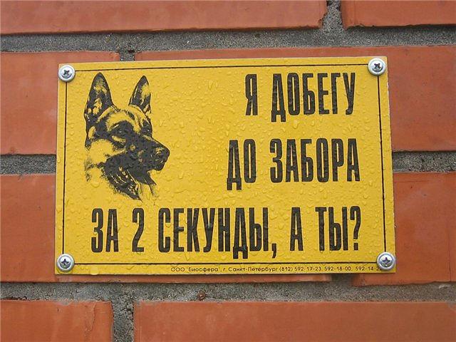 собака (640x480, 78Kb)