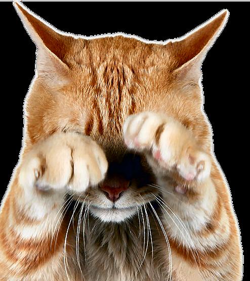 смену всем рисунки про котов отверженных данным, которые