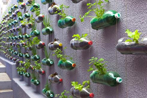 Альтернативный городской висячий сад