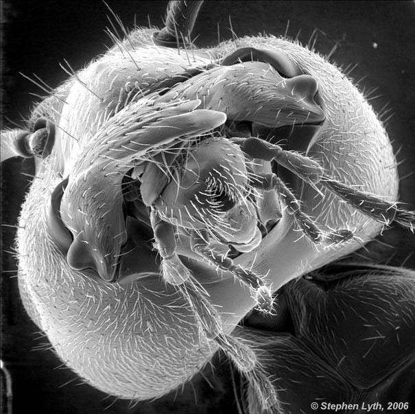 looking-at-the-world-through-a-microscope-ant (605x604, 84Kb)