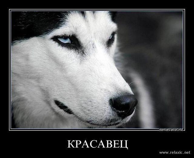 Теги. ссылка. karinka lonelyКомментарии. щенок. собаки. хаски.