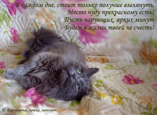 тучкин_пожелания_01 (500x366, 52Kb)