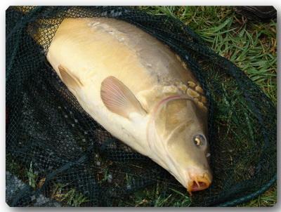 Рыбалка 77402169_893_clubfishru_1