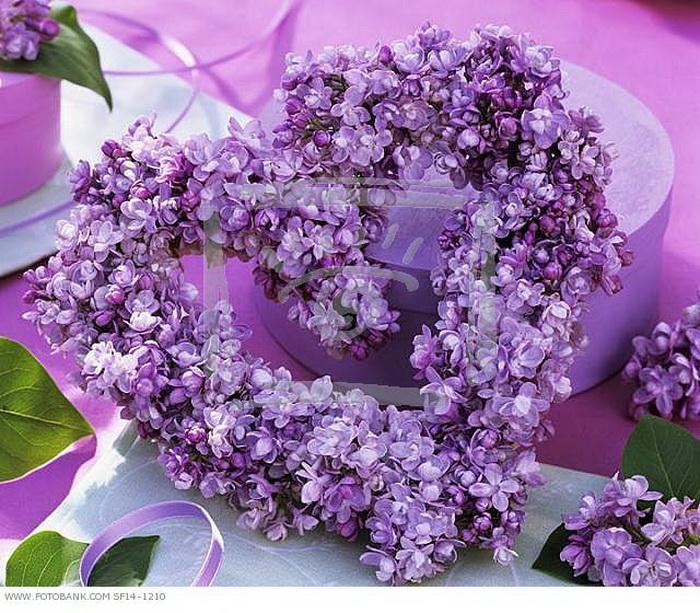 heart-flower11 (700x613, 211Kb)