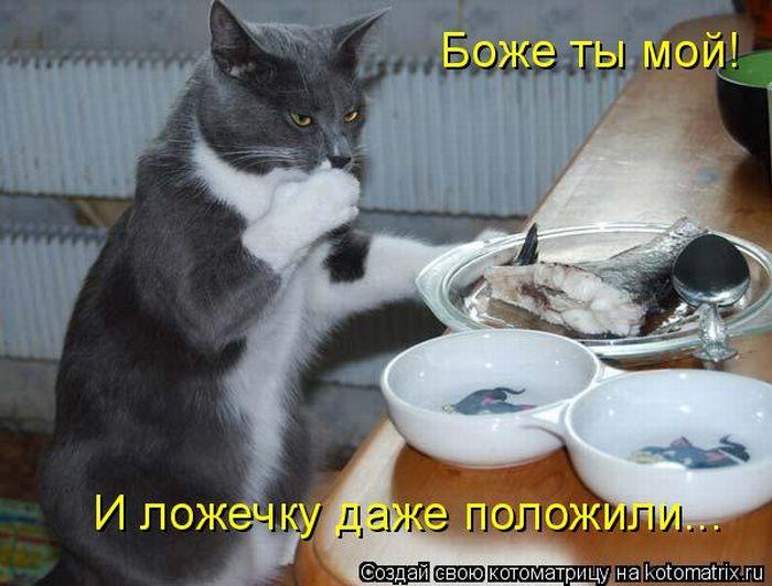 1313736292_kotomatritsa-10 (700x531, 60Kb)