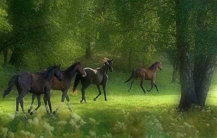 Время коня – конец весны.