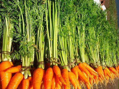 морковь (500x375, 226Kb)