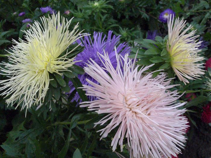 Над ними бабочек дневная суета.  Цветы пестрят на клумбах пред домами.  Не счесть оттенков их.  Взгляните сами!