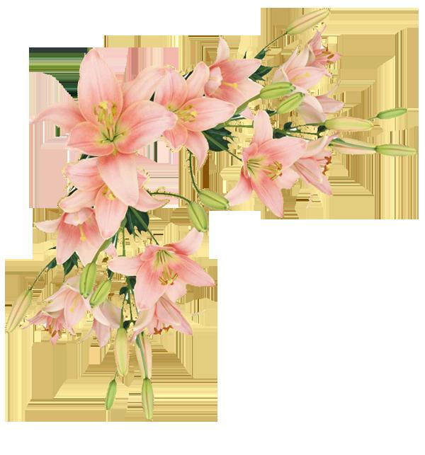 верх роз лилия (600x643, 341Kb)
