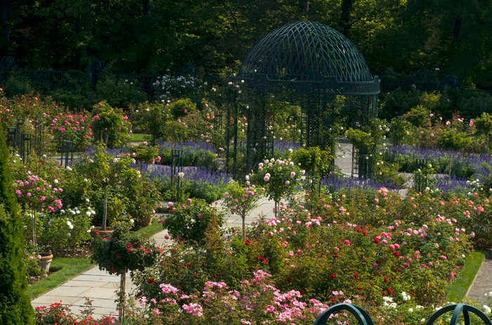 All sizes  Peggy Rockefeller Rose Garden  Flickr - Photo Sharing! (700x462, 810Kb)