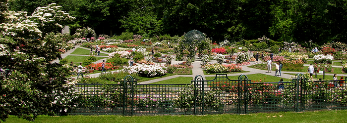 peggy rockefeller rose garden  Flickr - Photo Sharing! (700x249, 435Kb)