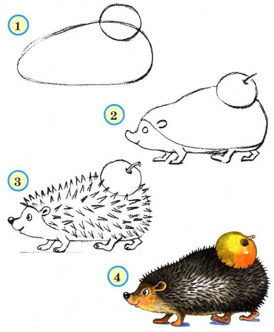 Мы учимся рисовать ежика с яблоком на колючках.  Научиться рисовать ежа очень просто, следуйте указаниям картинок...