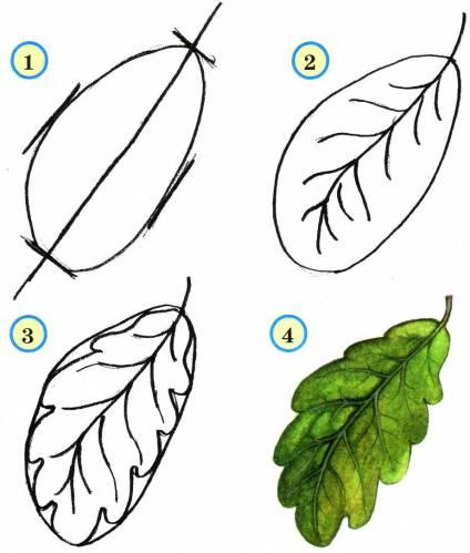 Кленовый лист Кленовые листья бывают разного цвета.