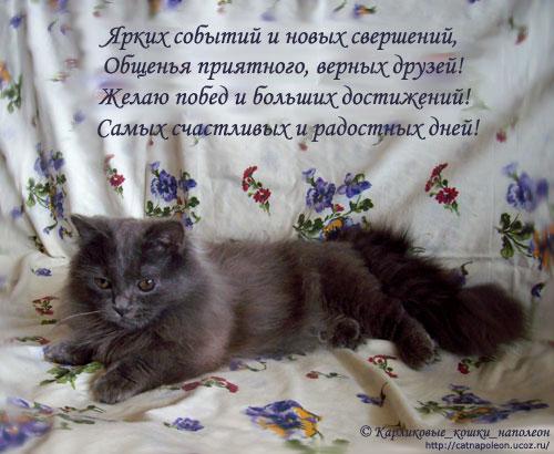 Поздравления с днем рождения от кота хозяину
