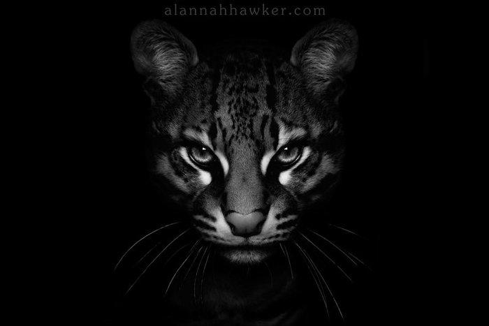 dark_side____by_alannahily-d3da15p (700x467, 25Kb)