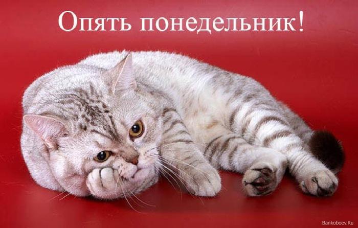 Bankoboev.Ru_opyat_ponedelnik (700x446, 84Kb)