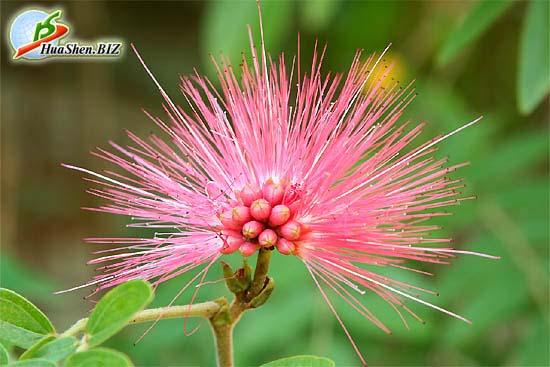 Цветок copy (550x367, 55Kb)