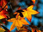 ������ 07_autumn (700x525, 70Kb)