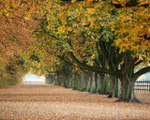 ������ Nature_Seasons_Autumn__006057_ (700x560, 284Kb)