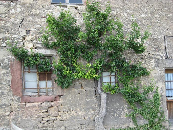 Замки Дорнбург-на-Заале 11710