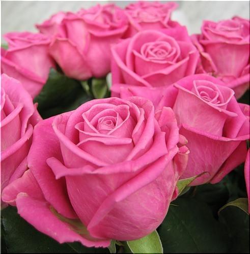 розы для тебя (491x500, 60Kb)
