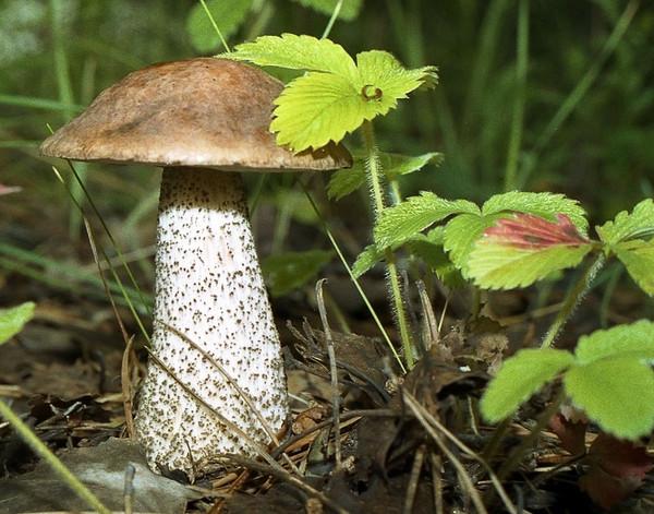 Персональный сайт грибы