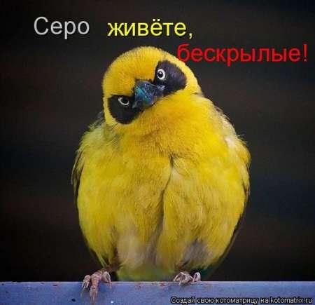 1279824431_s3img_46944326_26187_1 (450x435, 17Kb)