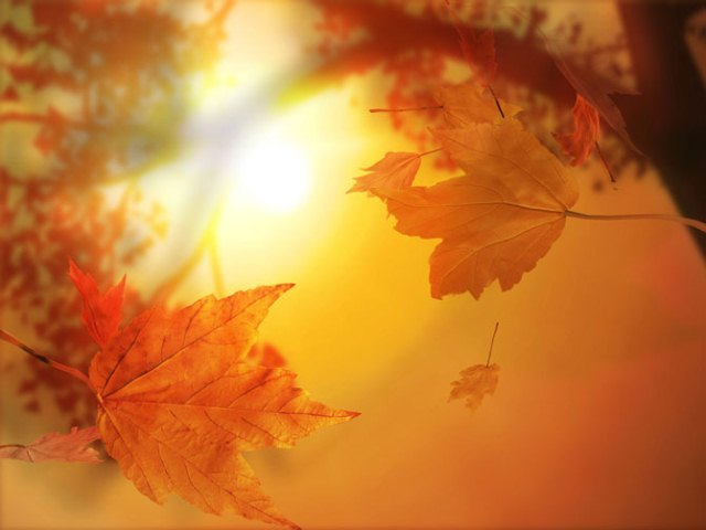 autumn kiss_ (640x480, 35Kb)