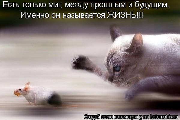 3507063_9H (600x399, 31Kb)