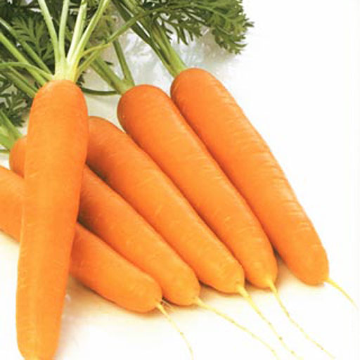 4278666_carrot4_0 (512x512, 41Kb)
