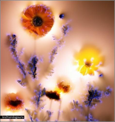 flower_volt2 (474x500, 48Kb)