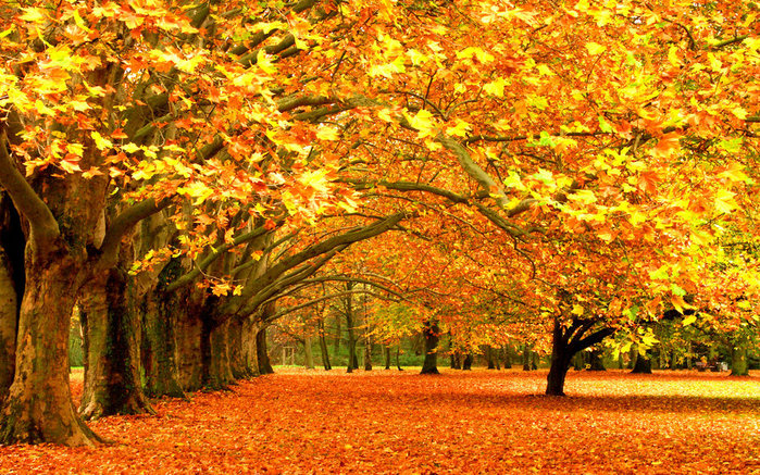 18339-desktop-wallpapers-wonderful-autumn (700x437, 225Kb)