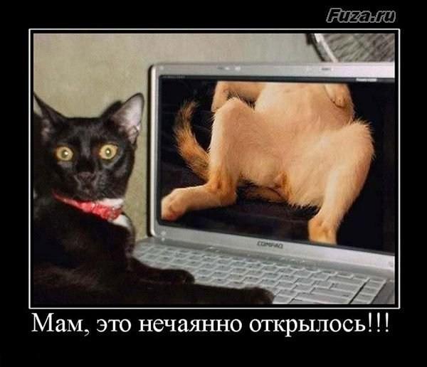 3507063_1265499120_demotivatory_0819_www_xoxot_org (600x516, 51Kb)