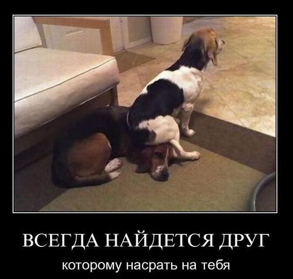 3507063_demotivatori039 (600x573, 60Kb)