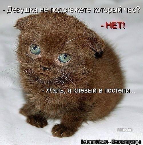 3507063_kot_01 (500x506, 70Kb)