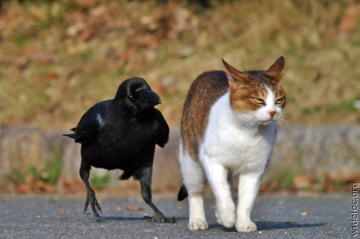 animals_friendship_37 (700x466, 41Kb)