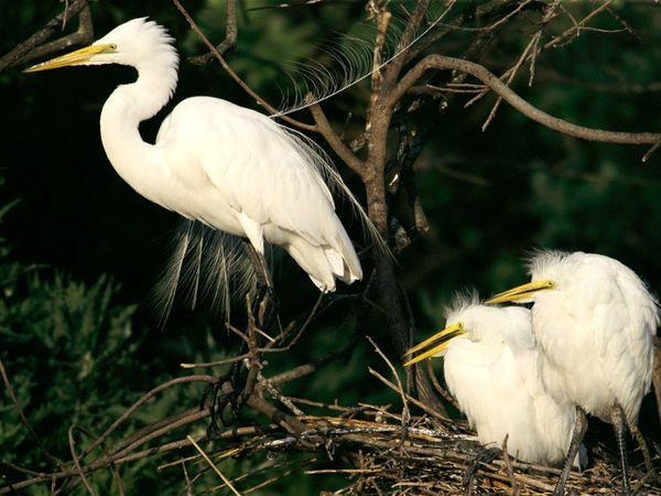 птицы (600x450, 54Kb)