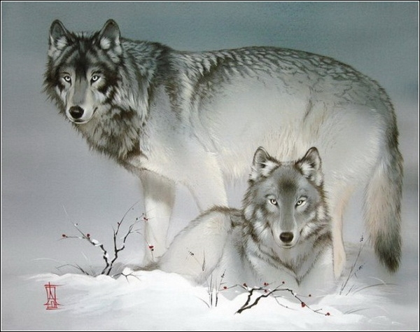 3821971_1313460570_wolves (600x474, 160Kb)