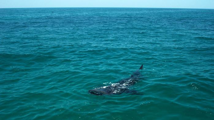киты 1 (700x393, 94Kb)