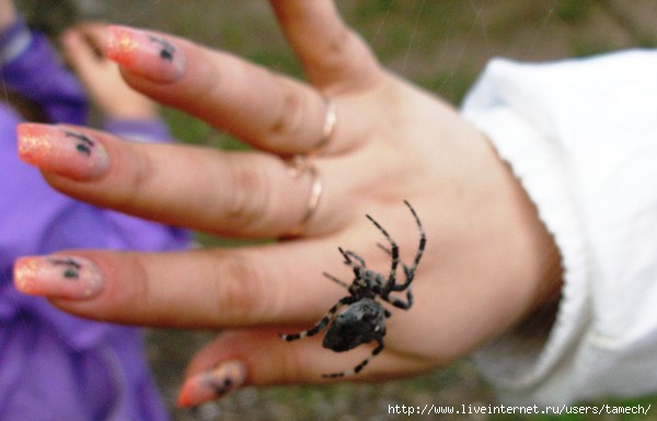 примета увидеть вечером большого паука витамина часто