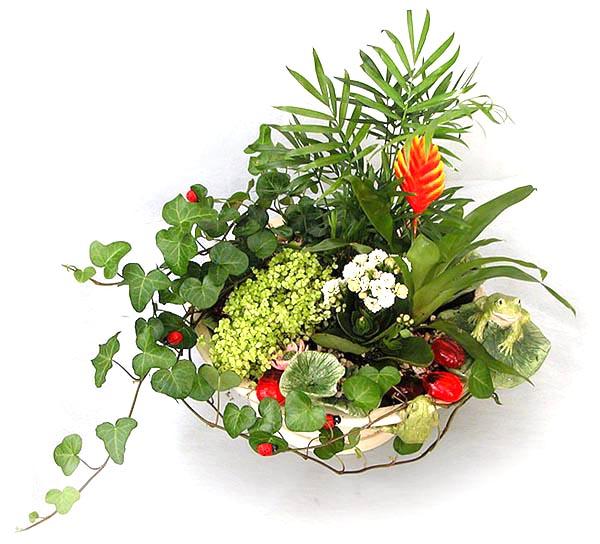 комнатные растения/4171694_cveti (600x544, 88Kb)