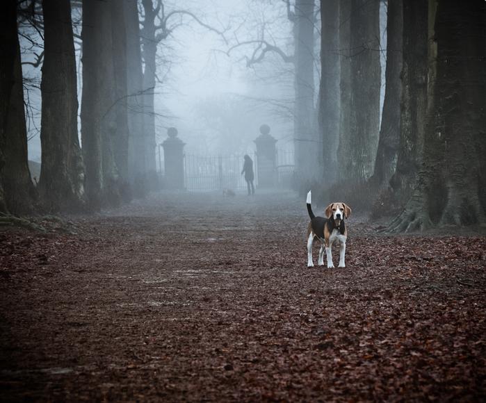 Прозрачный лес один чернеет И