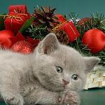 Превью 5663-kitten (150x150, 6Kb)