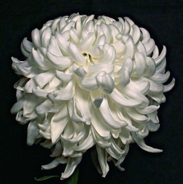 Белая шар (598x603, 56Kb)