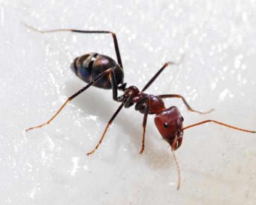 ...муравей - символ трудолюбия.Это маленькое насекомое